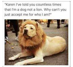 funny dog memes karen * funny karen memes hilarious + funny karen memes + karen cat memes funny + funny animal memes karen + funny dog memes karen + funny cats memes karen + funny cat memes with karen + really funny karen memes Funny Dog Memes, Cat Memes, Funny Dogs, Hilarious Sayings, Dog Humor, 9gag Funny, Memes Humor, Cute Animal Memes, Animal Quotes