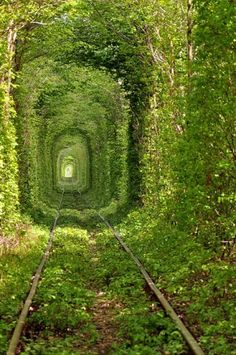 beautiful train pass through, reminds me of the secret garden
