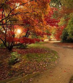 Estrada no campo no outono.  Fotografia: eleanor.