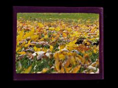 Check out this item in my Etsy shop https://www.etsy.com/listing/464457522/ground-view-autumn-leaves-i-photo-block