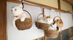 Hanging cats!!