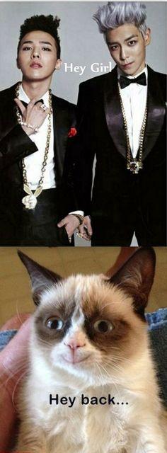 """Grumpy cat loves a double combo--GD and TOP"" HAHAHA Grumpy cat just loves Kpop!! huehueheuhue"