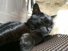 Duir est une perle Noire qui fait notre Bonheur depuis 5 ans.