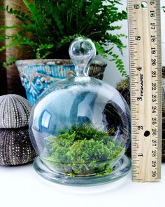 Ive got 15 of these cloche jars! what a great way to display glass beads ive made. juat sit them in the moss! Mini Cloche Terrarium Bell Jar with Live Moss