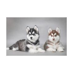 zwei_huskies_leinwand_drucke-r3057895570ed4c3a8d635c71d4e670b4_vkocq_8byvr_324.jpg (324×324)