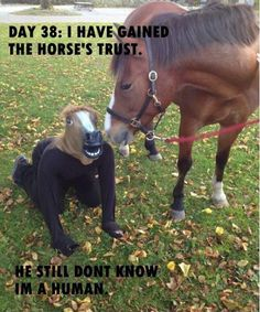 Page 89 of 830 - Funny Animal Memes and GIFs that are pure comedy gold. Funny Horse Memes, Funny Horses, Funny Animal Memes, Funny Animal Pictures, Funny Photos, Funny Animals, Funny Memes, Hilarious, Jokes