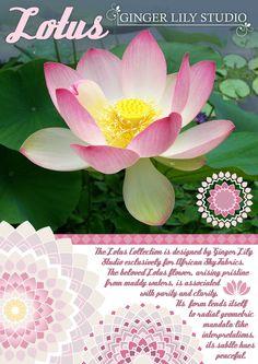 Lotus Collection description