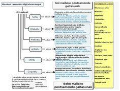 Bloomen Taxonomia digitala Euskeraz!!!, milesker Maite