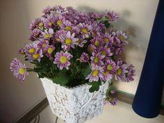 Mini crisantemo Chrysanthemum, Mini, Plants, Bouquets, Flowers, Plant, Planets, Chrysanthemum Morifolium