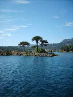 Beautiful - Pehuen Huapi, Chile