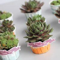 Mini Succulent Planted Favors