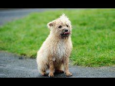 Собака в одиночку спасает жителей графства от нашествия крыс