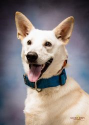 SUCCESS:  ADOPTED!!! General 495585 is an adopted German Shepherd Dog Dog in Houma, LA. We are accepting adoption requests at this time. His ADOPTION FEE IS $105.00 _ (SEE BELOW what is included in this fee). Please save ...