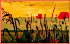 Γη και Ελευθερία.: Καλό καλοκαίρι.