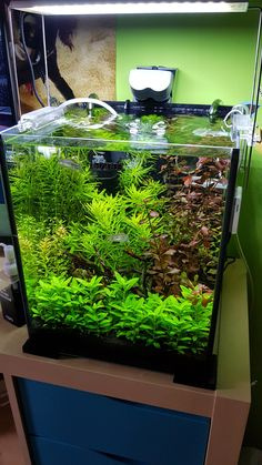 PN Source by nowakpawel Aquarium Setup, Nano Aquarium, Home Aquarium, Nature Aquarium, Aquarium Design, Marine Aquarium, Aquarium Fish Tank, Planted Aquarium, Tropical Freshwater Fish
