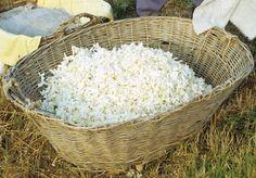 Le Jasmin, une histoire d'amour, fleur de Provence, parfumerie de grasse, Joy de Patou