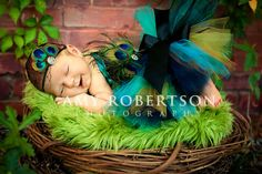 Gorgeous Peacock Custom Tutu with Dark Turquoise Black Ribbon, Fascinator and Peacock Maternity Belt
