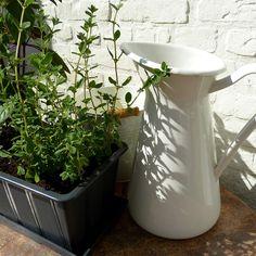 Some Beginner Tips for Apartment Gardening - Apartment Gardening Savvity - pinnerve Cilantro Plant, Chives Plant, Balsamic Vinegar Dressing, Growing Raspberries, Mint Plants, Fall Fruits, Kitchen Herbs, Container Gardening, Herb Gardening