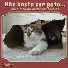Eles adooooram um sacola. É uma verdadeira fixação! #gato #bleckim #nãobastasergato