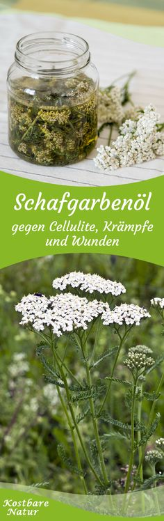 Die weit verbreitete Schafgarbe ist ein wirksamen Arzneikraut, das dir in einem … The common yarrow is an effective medicinal herb that can help you with abdominal cramps, headaches and migraines in an oil extract. Natural Medicine, Herbal Medicine, Home Remedies, Natural Remedies, Coconut Health Benefits, Medicinal Plants, Natural Cosmetics, Homemade Beauty, Natural Healing