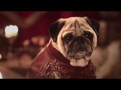 "It includes Jon Snow, Daenerys Targaryen and King Joffrey. | A Couple Have Recreated ""Game Of Thrones"" With Their Pugs And It's Magnificent"