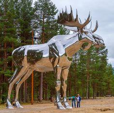Storelgen (The Big Moose) Atna, Norway
