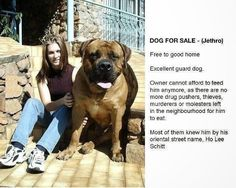 Funny Dog For Sale Advert