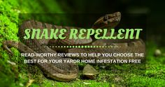 Snakes are dangerous especially when they pop into our yards unexpectedly. Protect your yard and your family by knowing the best snake repellents today. Best Pest Control, Bug Control, Palmetto Bugs, Household Pests, Weed Spray, Bees And Wasps, Pest Management, Humming Bird Feeders, Garden Guide