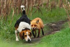 Probably The World's Worst Hunting Dog Photograph by Mircea Costina Photography - Probably The World's Worst Hunting Dog Fine Art Prints and Posters for Sale
