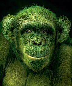 BY IGOR MORSKI.....BING IMAGES.... http://calgary.isgreen.ca/ http://www.arcreactions.com/usb-memory-sticks-2/