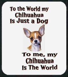 Love my Chihuahua's!!