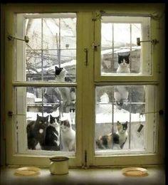 Che bella finestra ....