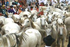 Fêtes votives au coeur des traditions Goats, Horses, Traditional, Animals, Tourism, Horse, Animales, Animaux, Animal