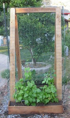 Build a trellis.  Using sturdy materials like 2 x 4's and hardware cloth, you can fashion trellises for all of your climbing and vining edibles, making more room in the ground for vegetables and herbs that tend to bush or clump. Small pumpkins, summer squash, cucumbers, peas, and green beans will love scrambling up the trellis, and they'll be easier to maintain and harvest when their long vines are elevated.