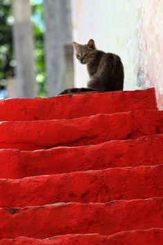 Flight of red steps with cat on Hydra island ,Kaminia, Greece