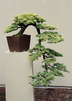 Shows and exhibitions - 2011 - Bonsai Empire
