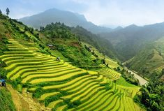 Paddy Fields in Vietnam! 20 UNREAL Travel Destinations you have to see! Click through to read the full post! Visit Vietnam, Vietnam Tours, Vietnam Travel, Vietnam Vacation, North Vietnam, Best Countries To Visit, Cool Countries, Countries Of The World, Bali Lombok