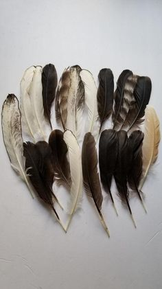 Assorted Chicken Feathers 24 Naturally Molted (B) Mosquito Plants, Plant Cuttings, Feather Crafts, Smudge Sticks, Cheese Cloth, Nature Crafts, Flower Petals, Dried Flowers, Fly Fishing