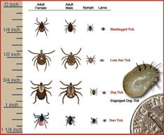 It is that time of year again!! Fleas and ticks are starting to be reborn just to terrorize us and our beloved animals.  They can be very dangerous giving your animal heart worms or Lyme disease and just like with our own bodies we may not want to put harsh chemicals on our animals or our yards.