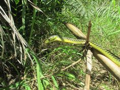As the top snake catcher Noosa professional, Luke Huntley provides reliable and safe snake management services..For More Infortmation visit https://snakecatchernoosa.com.au/