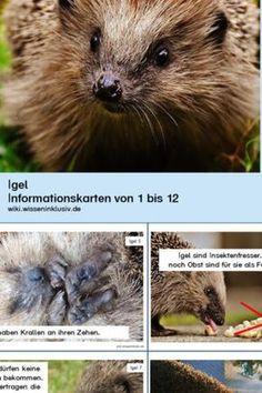 Igel - Lesekartei • Materialien Grundschule, wiki.wisseninklusiv.de