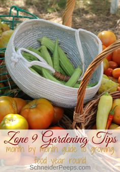 Zone 9 Gardening plus get planting tips by zone for zones Zone 9 gardening is a year round project. In this month my month zone 9 planting guide learn how to grow fruits and vegetables and what plants we grow in our zone (Texas) garden. Plus plant Texas Gardening, Zone 9 Gardening, Hydroponic Gardening, Container Gardening, Organic Gardening, Vegetable Gardening, Gardening Hacks, Flower Gardening, Florida Gardening