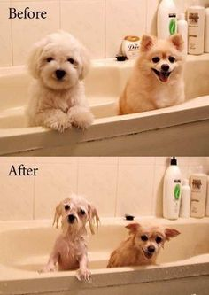 Dogs are just drowned rats in disguise.