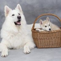 #dogalize Why find dogs for sale if you can adopt? #dogs #cats #pets