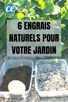 6 natural fertilizers your plants will love. Hydroponic Gardening, Hydroponics, Gardening Tips, Vertical Vegetable Gardens, Vegetable Garden Design, Herb Garden, Lawn And Garden, Potager Bio, Garden Terrarium