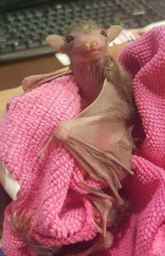 We Totally Appreciate These Photos Of Baby Bats - World's largest collection of cat memes and other animals Funny Baby Faces, Funny Babies, Cute Babies, Funny Guys, Cute Creatures, Beautiful Creatures, Animals Beautiful, Cute Baby Animals, Animals And Pets