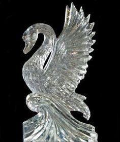 swan ice - Google Search