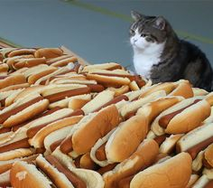 Don't know why this is so funny to me but cats and hot dogs is just such an absurd combination