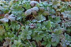 Loma on ihmisen parasta aikaa Perennials, Herbs, Colorful, Plants, Herb, Plant, Perennial, Planets, Medicinal Plants