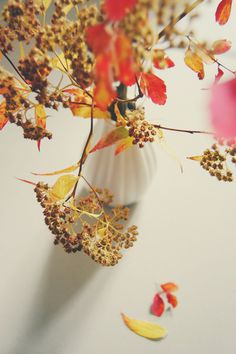 Autumn Love  by Sirka-hiltner | Photography